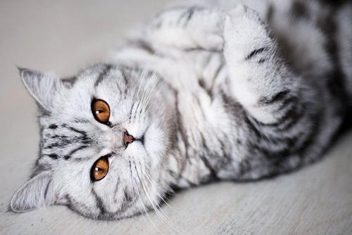 かわい過ぎる猫ちゃんの画像(28枚目)