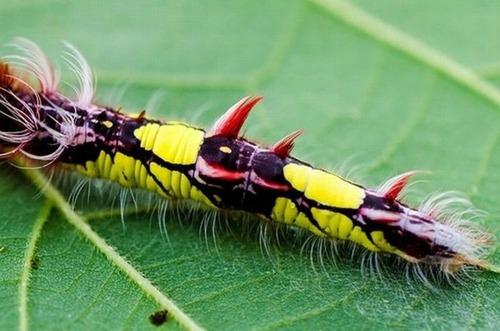怪しすぎる見た目の昆虫の画像(23枚目)