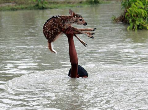 濁流に捲込まれた子鹿の助け方がワイルドすぎる少年!の画像(3枚目)