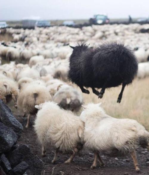 アイスランドの風景の画像(13枚目)