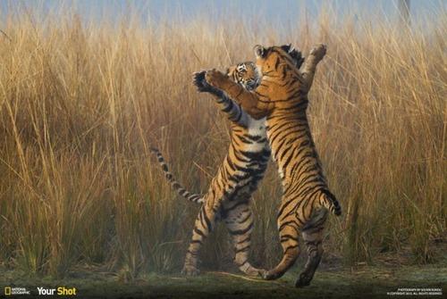 ナショナル ジオグラフィック!2015年で最も印象的だった写真の数々!の画像(18枚目)