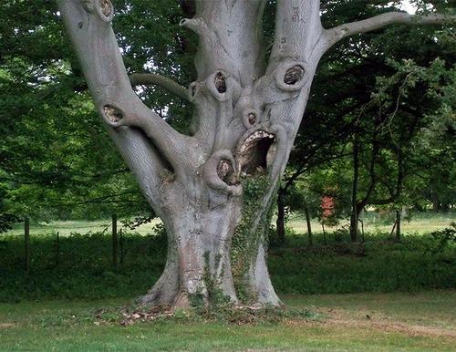 不気味な形の樹木の画像(24枚目)