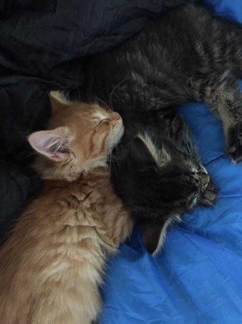 可愛く眠っている動物達の画像(8枚目)