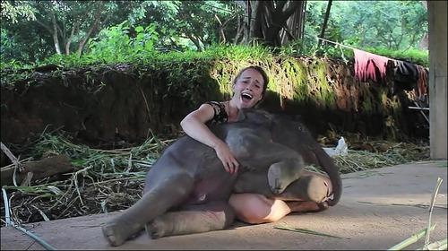 【動画】子供のゾウに懐かれると嬉しい_000007600