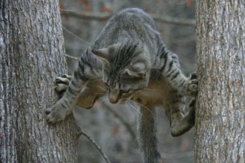 獲物を狙うかわいいネコの画像(19枚目)