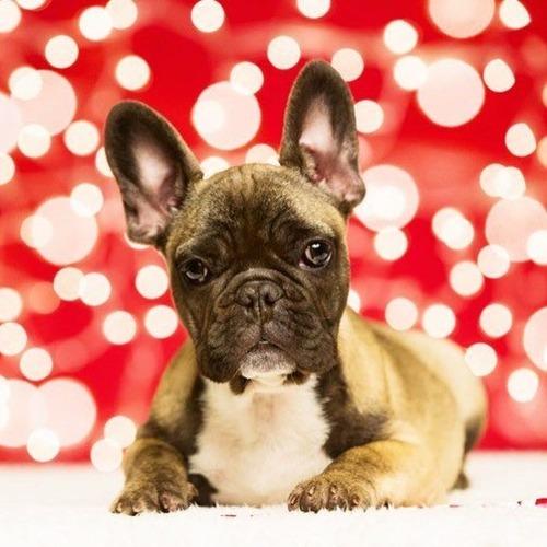 クリスマスのコスプレをした動物達の画像(29枚目)