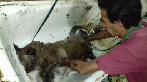 真っ黒になった子犬を洗ったの画像(5枚目)