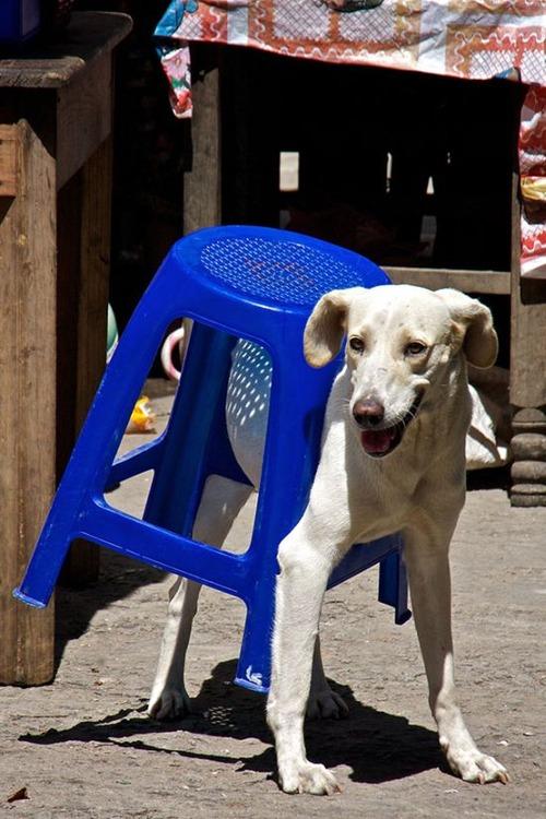 犬はバカ可愛い!!バカだけど憎めない可愛い犬の画像の数々!!の画像(5枚目)