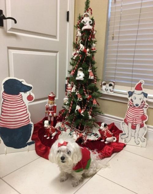 犬とクリスマスの画像(13枚目)