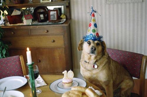動物達の誕生日の写真の数々!!の画像(18枚目)