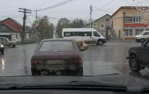 ロシアの日常の画像(12枚目)