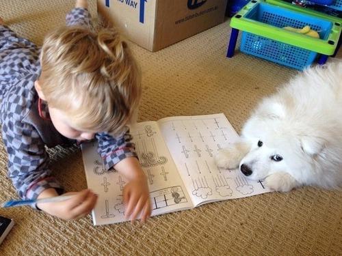 かわい過ぎる子犬の画像の数々!の画像(58枚目)