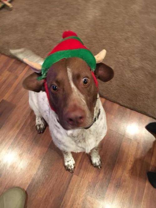 クリスマスのコスプレをした動物達の画像(7枚目)