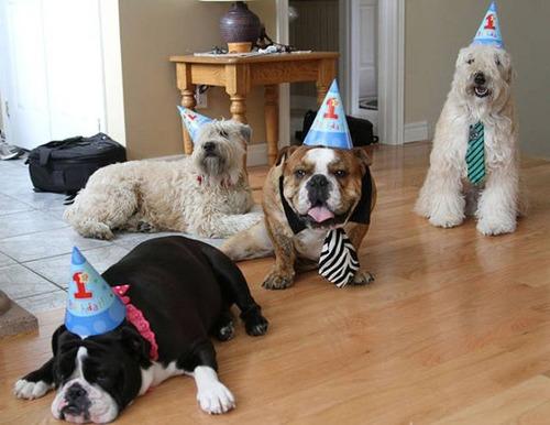 動物達の誕生日の写真の数々!!の画像(47枚目)
