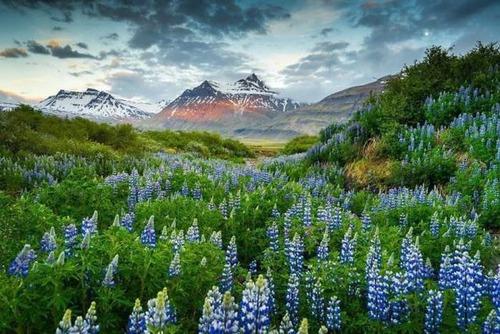 アイスランドの風景の画像(57枚目)