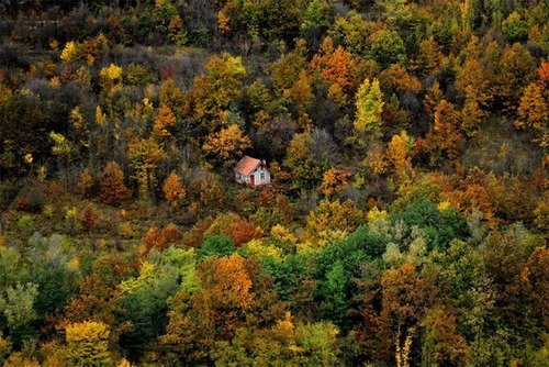 森の中の隠れ家の画像(8枚目)