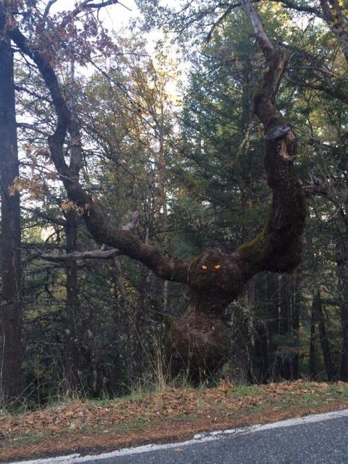 不気味な形の樹木の画像(4枚目)