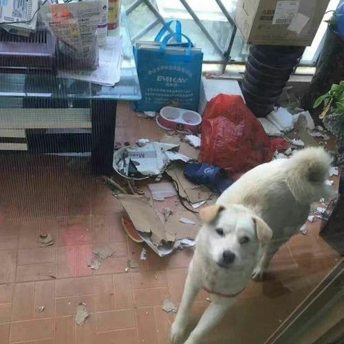 食用で販売されていた犬の画像(5枚目)