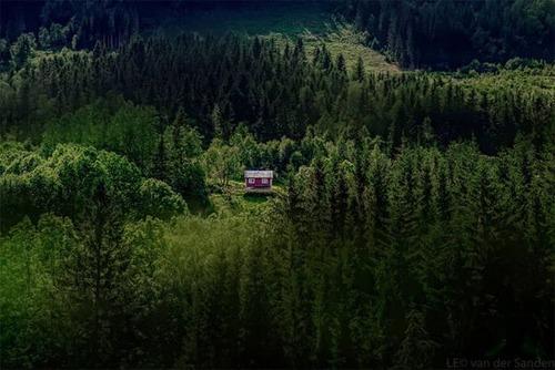 森の中の隠れ家の画像(2枚目)