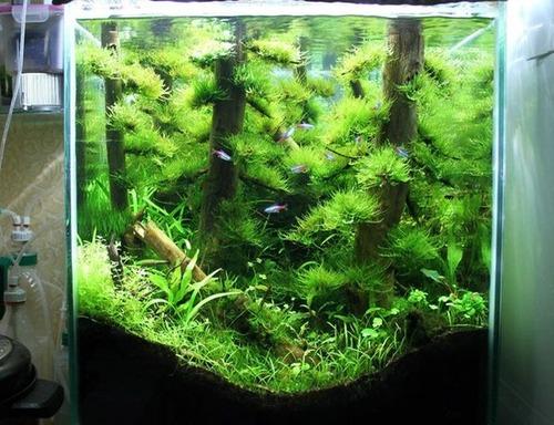 落ちている木で作った水中の森のようなアクアリウムが凄い!!の画像(8枚目)