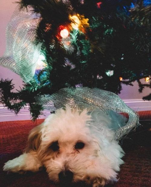 犬とクリスマスの画像(17枚目)