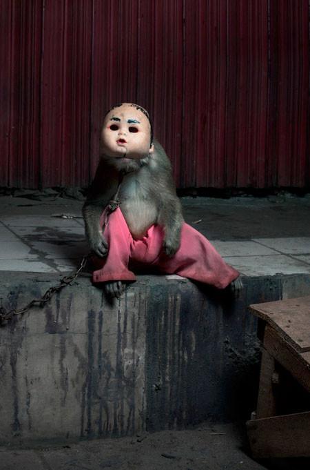 【画像】サルにマスクを被せたら凄まじく怖くなったwwwの画像(6枚目)