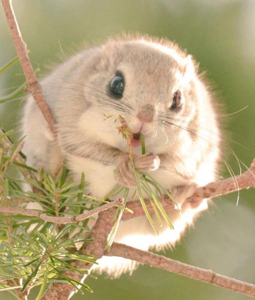 ほのぼのする野生の動物たちの画像の数々!の画像(2枚目)