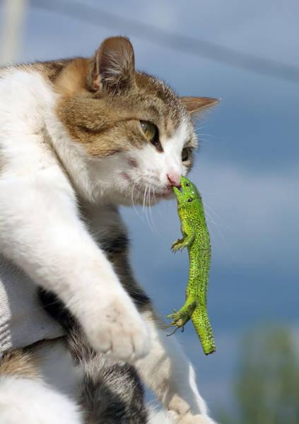 動物たちの面白いの画像(11枚目)