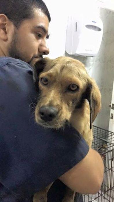 【画像】タールだらけのオイルまみれの瀕死の犬の救出から復活までの様子の画像(1枚目)