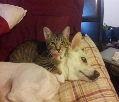 猫と犬の力関係の画像(6枚目)