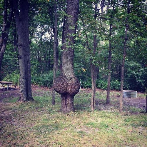 不気味な形の樹木の画像(20枚目)