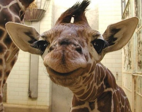 幸せそうな表情の動物達の画像(19枚目)