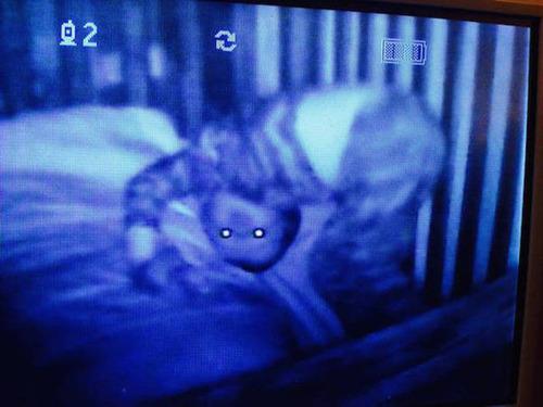 【閲覧注意】怖くて怖くて怖すぎる!実在するトラウマになる恐ろしい画像の数々…の画像(15枚目)