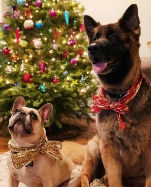 クリスマスのコスプレをした動物達の画像(1枚目)