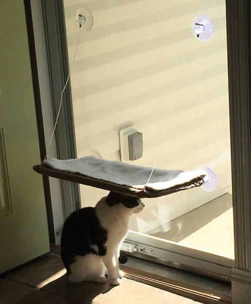 にゃんとも言えない、ちょっと困った猫の画像の数々!!の画像(16枚目)