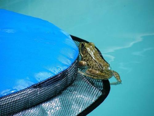 プールに落ちた動物を救うアイテムの画像(5枚目)