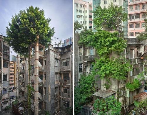 生えている樹木の画像(27枚目)