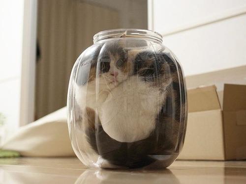 器に入った猫の画像(12枚目)