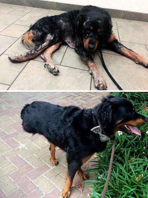 ホッとする!ノラ犬の飼主が見つかるビフォーアフターの比較画像!!の画像(17枚目)