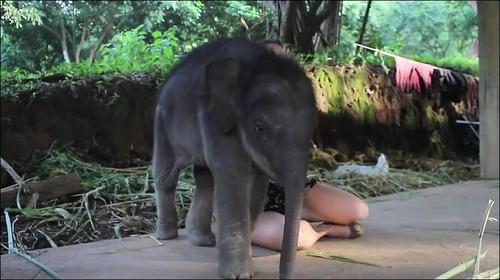 【動画】子供のゾウに懐かれると嬉しい_000000751