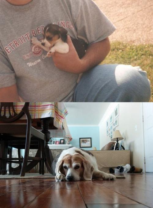 犬や猫の最初に撮った写真と最後に撮った写真の数々の画像(20枚目)