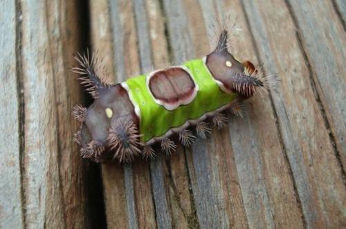 怪しすぎる見た目の昆虫の画像(15枚目)