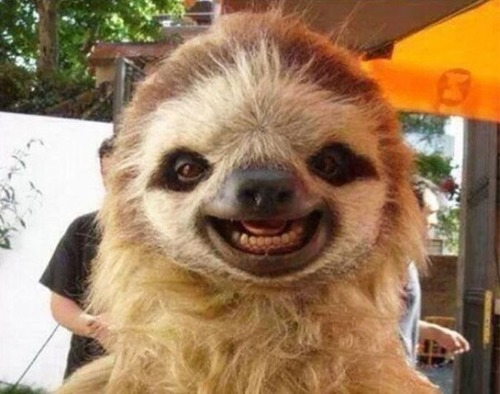 幸せそうな表情の動物達の画像(5枚目)