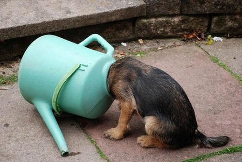 犬はバカ可愛い!!バカだけど憎めない可愛い犬の画像の数々!!の画像(14枚目)
