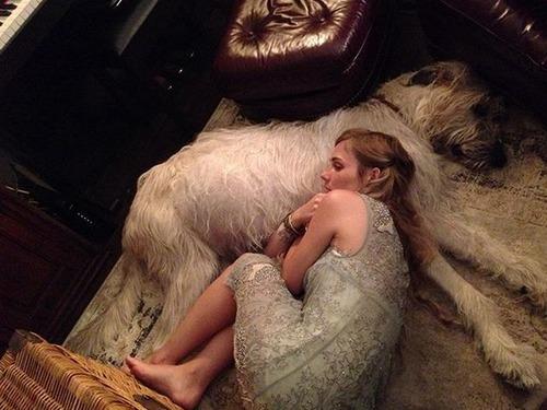 大きすぎる犬の画像(5枚目)