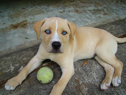 可愛い?可愛くない?ちょっと特徴的な雑種の犬の画像の数々!!の画像(1枚目)
