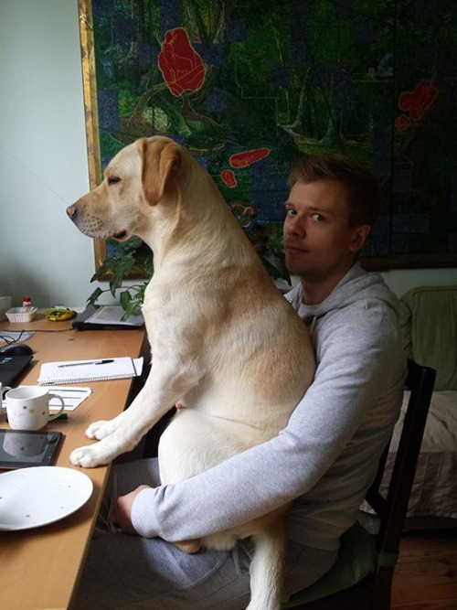 犬は可愛いけど、かなりジャマな感じの犬の画像の数々!!の画像(35枚目)