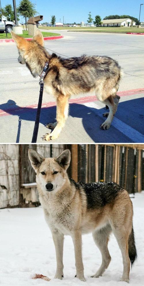 野良犬が保護された後の画像(18枚目)