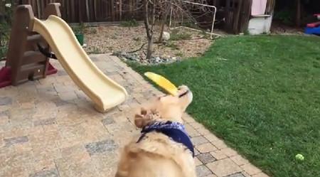 食物をなげて口でキャッチできない犬がひたすら悲しい9