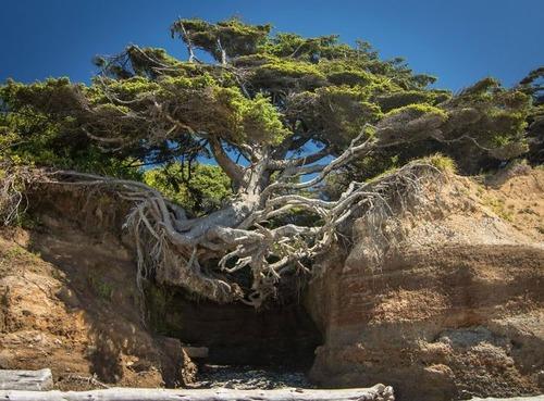 生えている樹木の画像(7枚目)